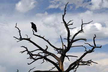 raven sitting on stark tree in silhouette