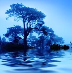 Fantasy trees at foggy morning. Soft focus.