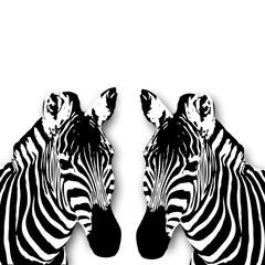 Zebra Illustration mit weissen Hintergrund