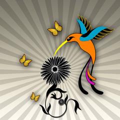 Illustration Kolibri