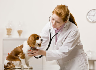 Veterinarian examining dog and listening with stethoscope