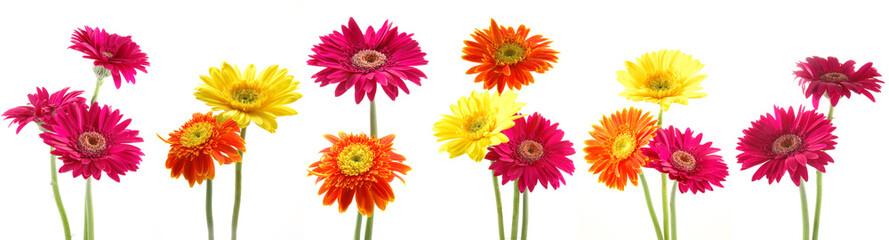 Six bunch of colorful gerbera flowers