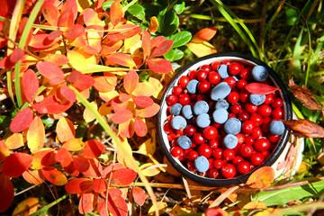 Wild berries: autumnal harvest