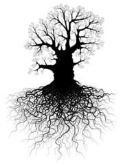 Tree with roots