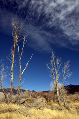 Trees in Great Sand Dunes National Park and Preserve
