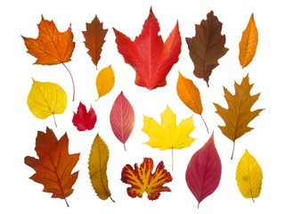 Different colorful autumn leaves, isolated on pure white