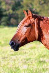 Paddock Horse