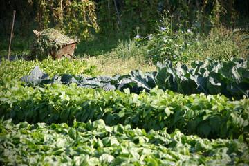 Gemüsegarten mit Schubkarre voller Unkraut