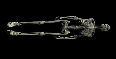 skeleton isolated on a black background