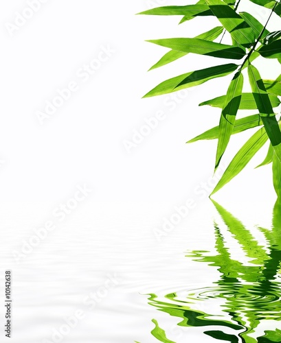 Bamboo With Reflection In The Water Zen Atmosphere