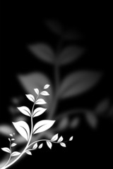 branch and leaves isolated over a black background