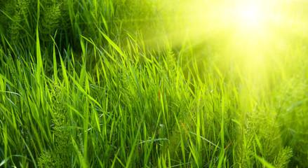 green gass and sunlight