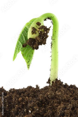 plante qui pousse photo libre de droits sur la banque d 39 images image 10197208. Black Bedroom Furniture Sets. Home Design Ideas