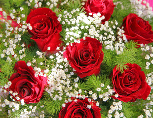 red fresh flowers with a green foliage
