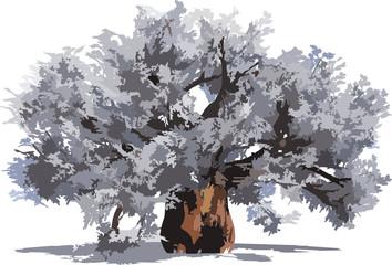 Huge baobab tree isolated