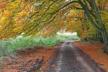 Autumn scene down an English Leafy Lane