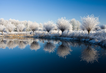 frost and a blue sky