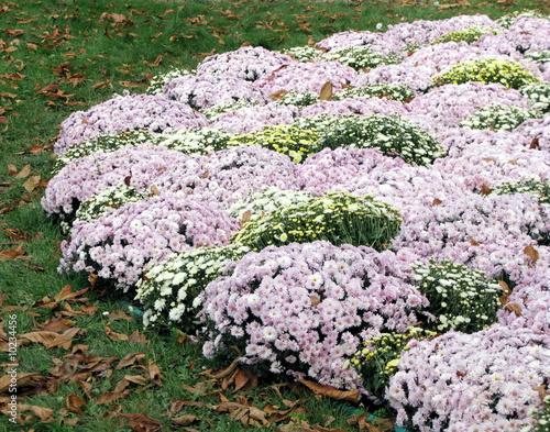 Massif de fleurs blanches et roses jardin public paris for Jardin de fleurs blanches