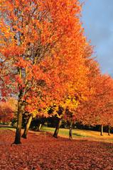 Spoed Foto op Canvas Baksteen autumn color in trout lake park vancouver