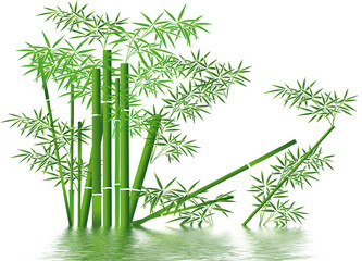 bamboo et ambiance aquatique