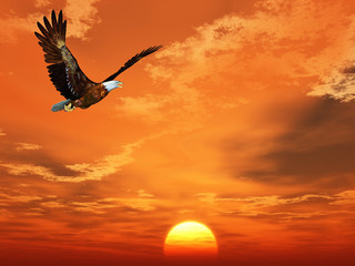 Fotobehang Volle maan Eagle flying on a background of the sunset sky