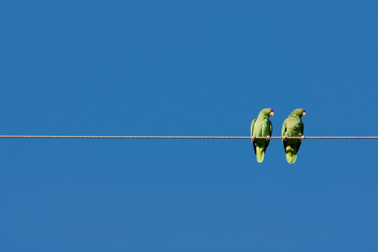 two parots hang out on a wire looking over their left