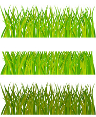 Set of grass. Vector illustration