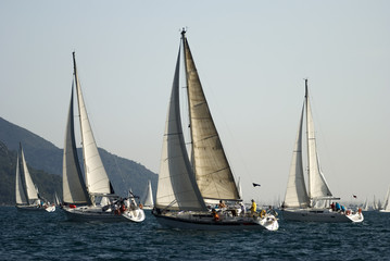 Sailboats are at race