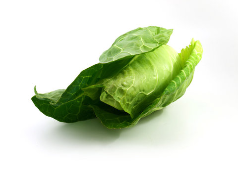 Fresh green pointed cabbage on white
