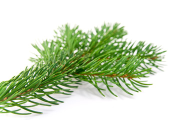 fir branche Christmas decoration on white background