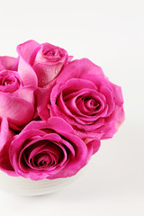 Detail of pink roses for Valentine or other event