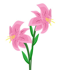 two pink lilies with stem and leaves - illustration