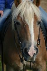 gerittenes Pferd
