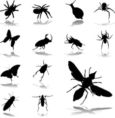 Set icons. Insects