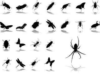 Big set icons. Insects