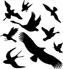 Set icons. Birds