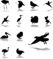 Set icons. Birds