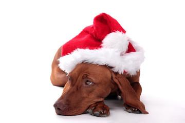 Tierisches Geschenk Weihnachten