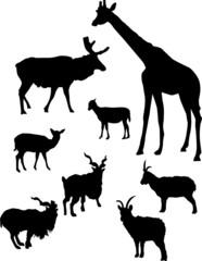 horned animals outline