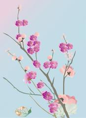 cherry tree flowers on blue