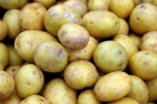 urban market potatoes