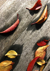 Wall Mural - automne