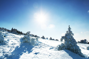 Winter forest in Crimean mountains