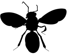 Bee102