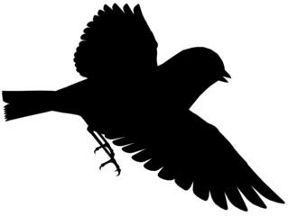 Bird101
