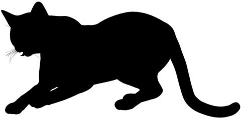 Cat104