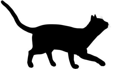 Cat105