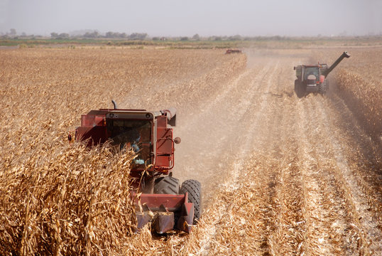 Combines harvesting corn, San Joaquin Valley, California