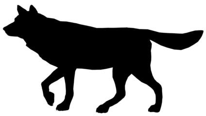 Wolf102