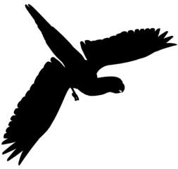 Macaw102